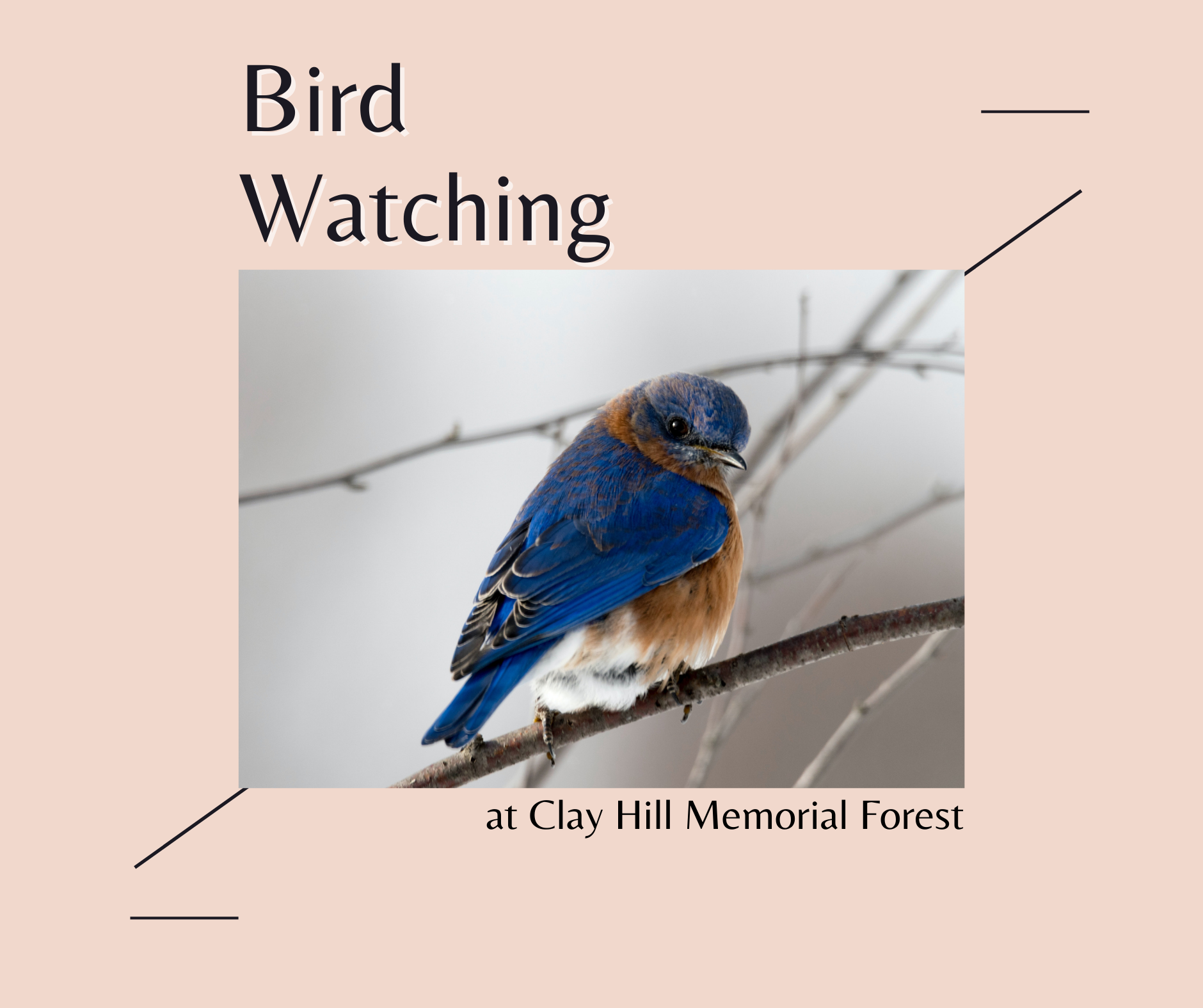 Bird Watching at Clay Hill Memorial Forest