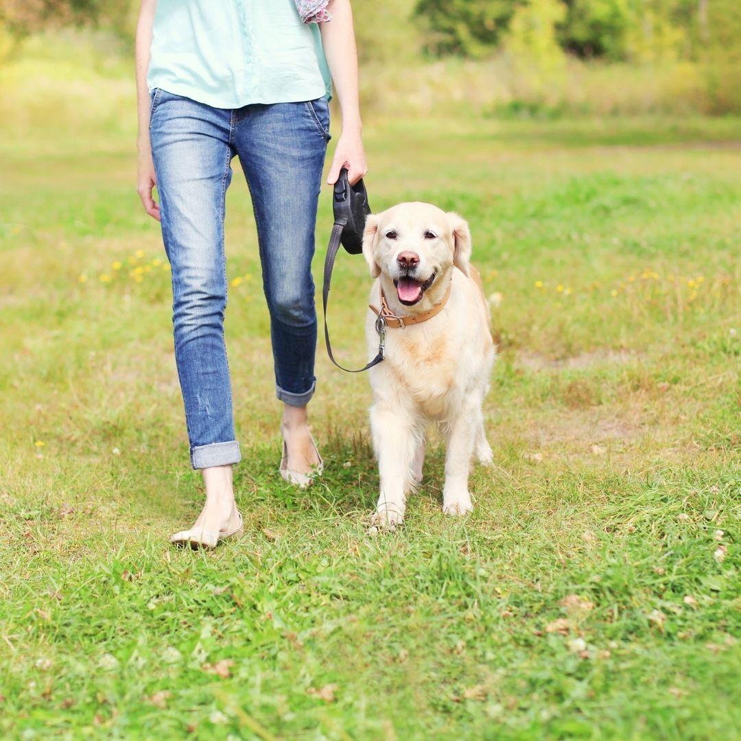 Dog Walk Day